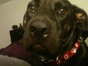 Luke the Puppy Dog
