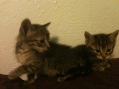 Marco and Pollo want you to join the Kitten Protection League.