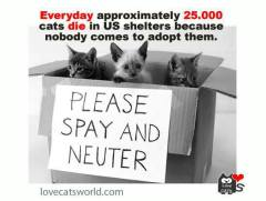 Spay&Save