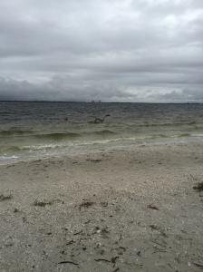 I picked sea shells by the sea shore